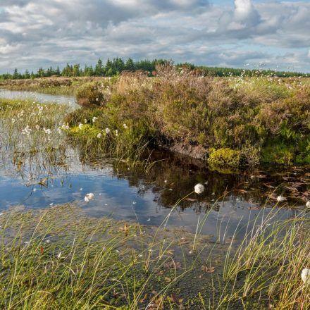 Bellcrag flow peat bog