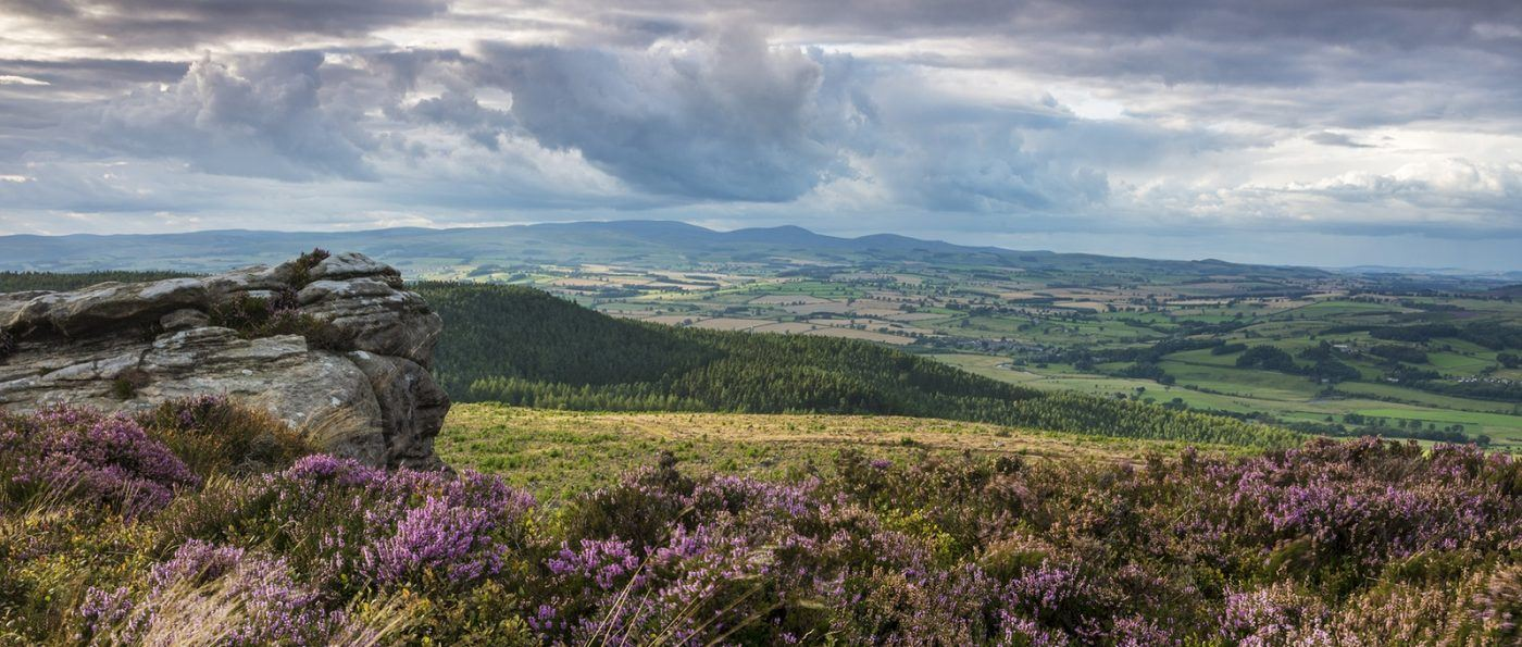 a landscape photo of the Simonside Hills covered in purple heather