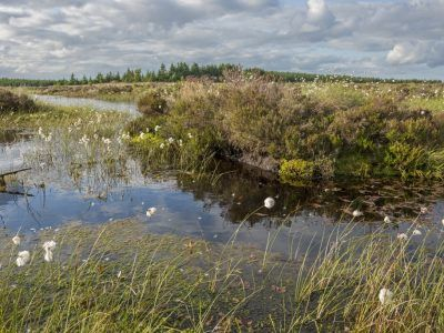 One of the Parks Peat bog habitats