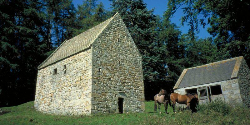 Horses next to Woodhouses Bastle