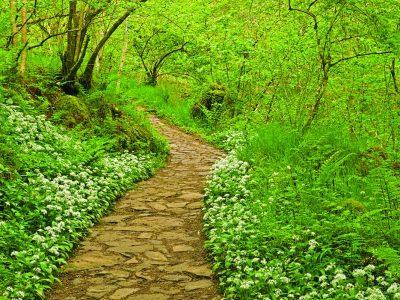 Hareshaw Linn flora,