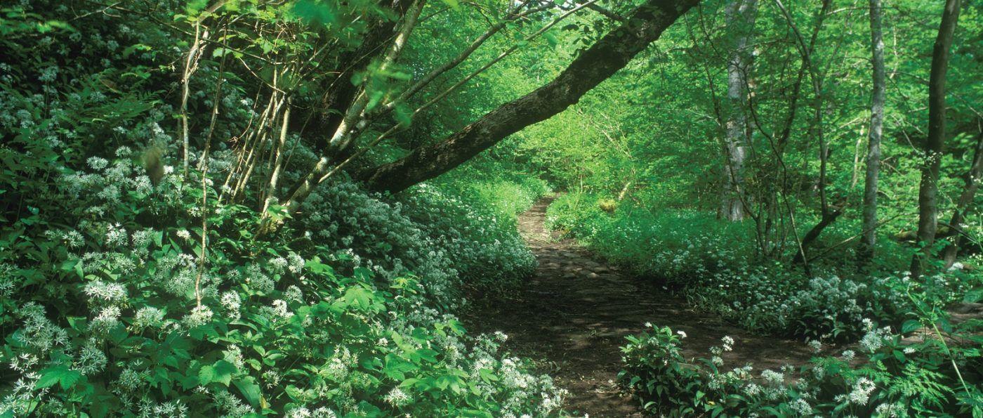 Woodland at Hareshaw Linn