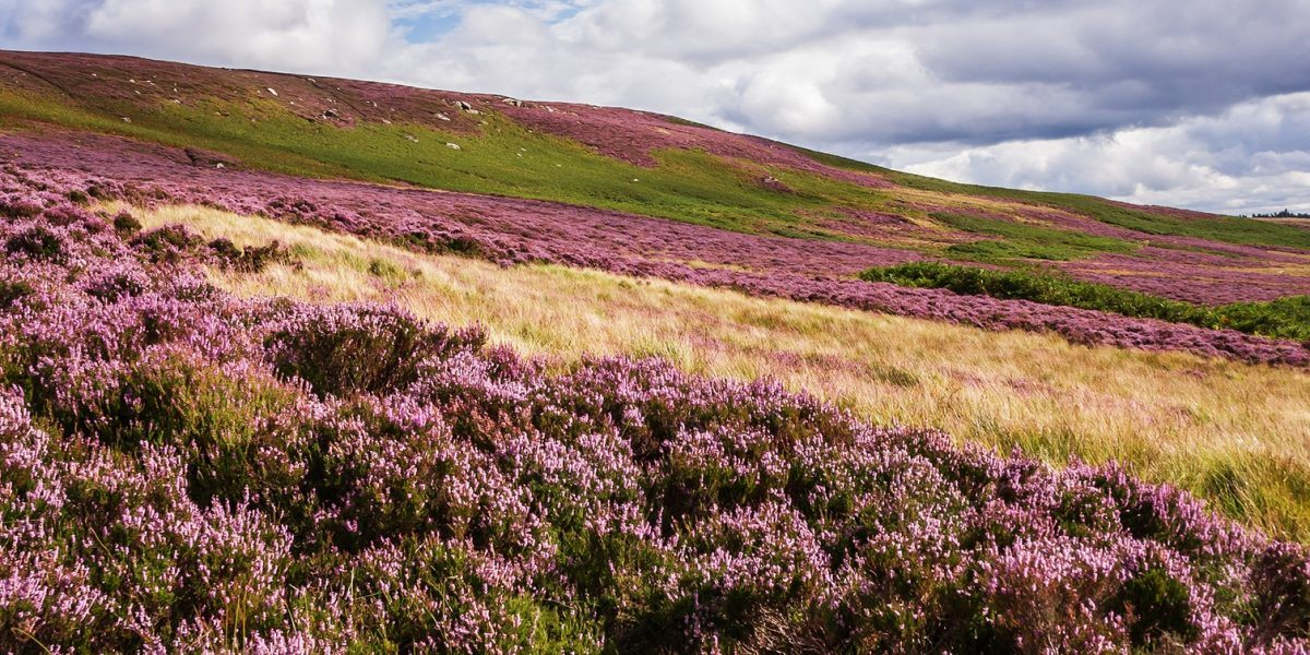 Enjoy nature in Northumberland National Park on Padon Hill