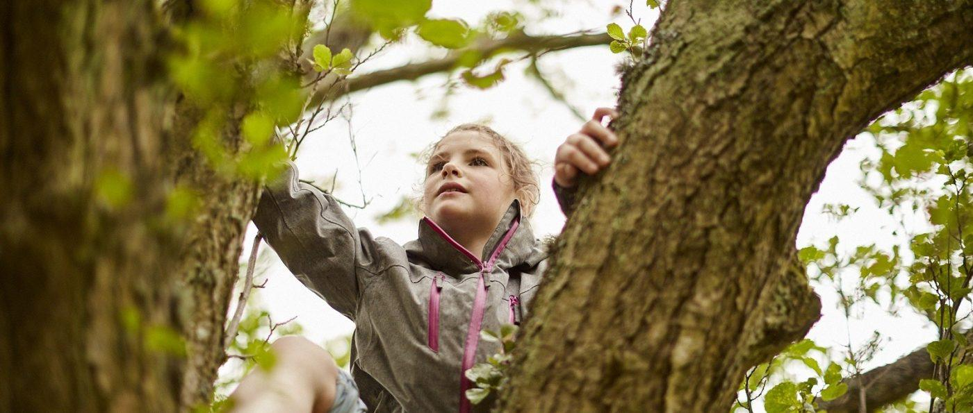 A young girl climbs a tree in the national park