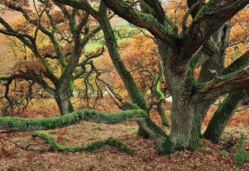 Collingwood oakwood behind Hethpool House