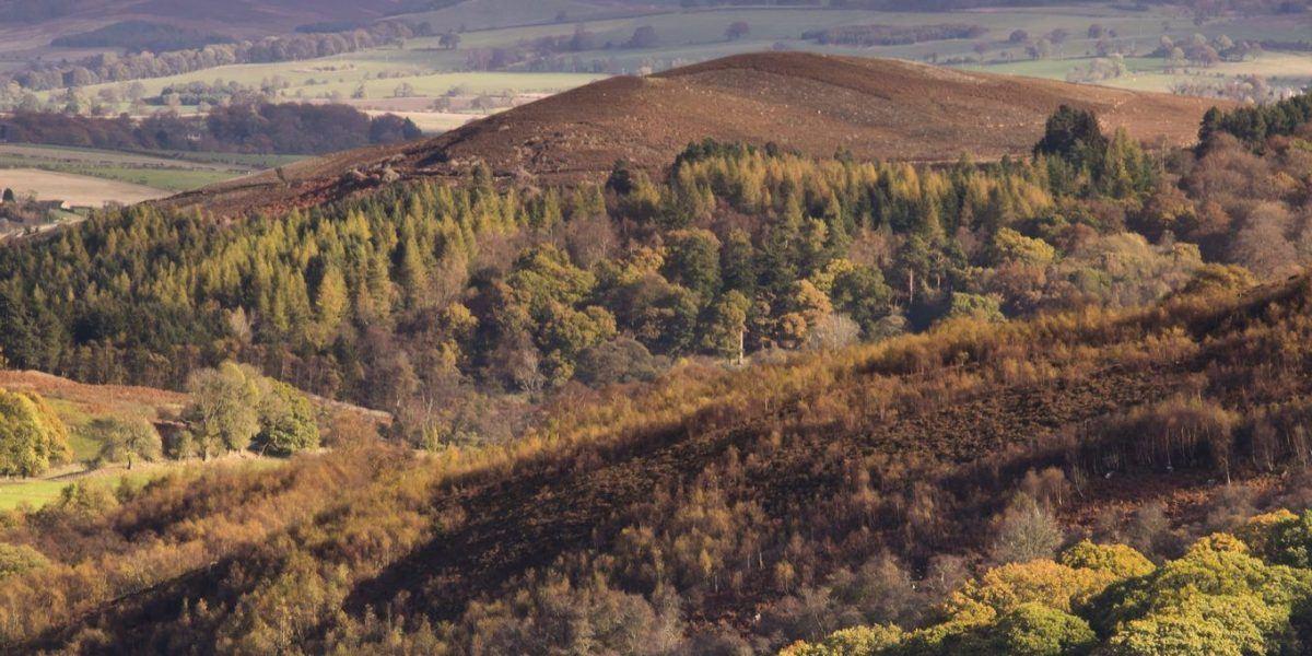 Trees in autumnal colours in Billsmoor Park near Elsdon