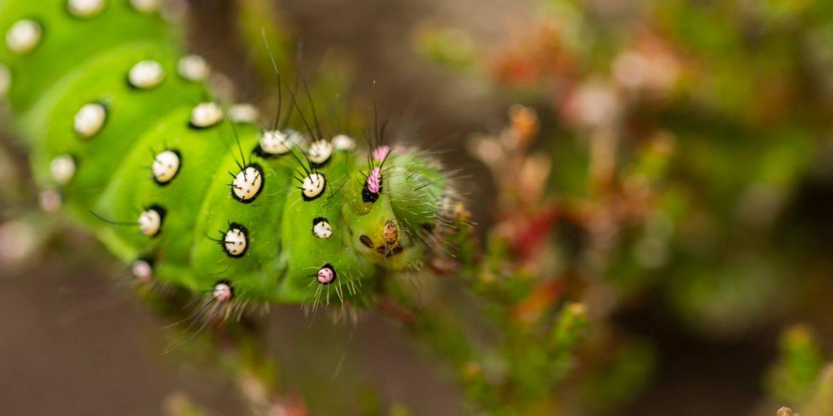 a close up of a caterpillar