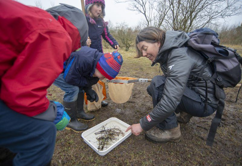 Young children pond dipping with National Park Ranger