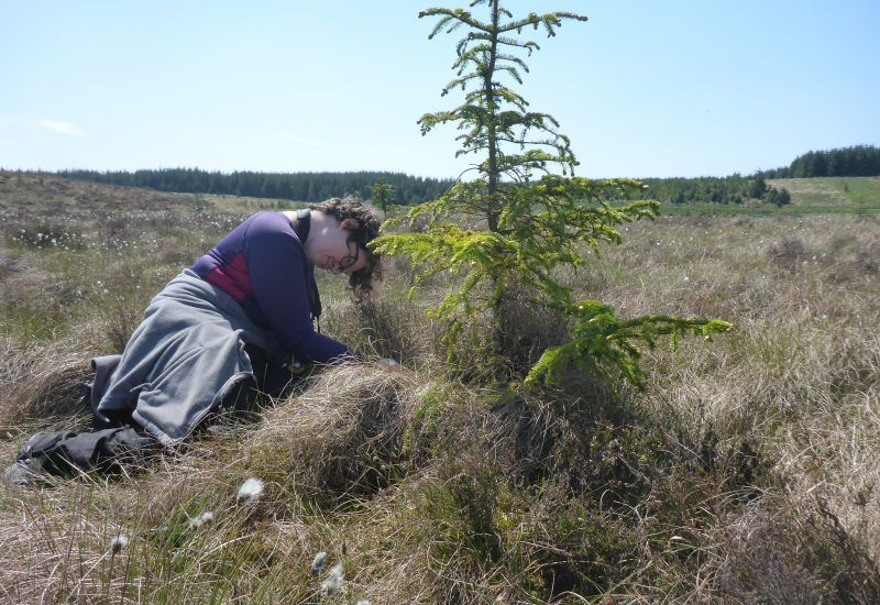 A young woman star close to a Sitka Spruce tree in a field