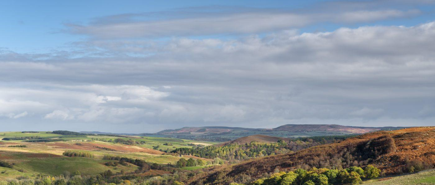Trees in autumnal colours in Billsmoor Park near Elsdon, Northumberland National Park