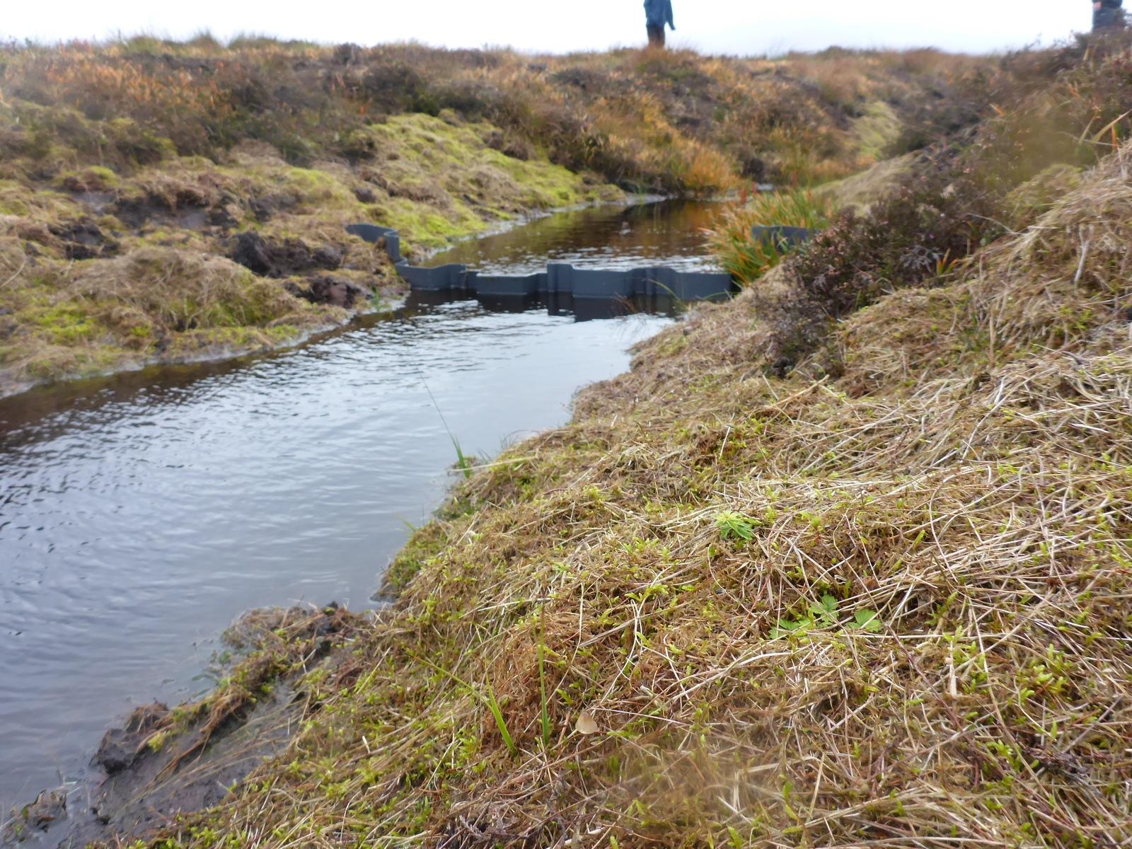 peat restoration work