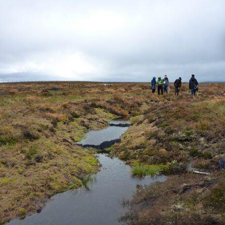 Peat restoration on the Lampert