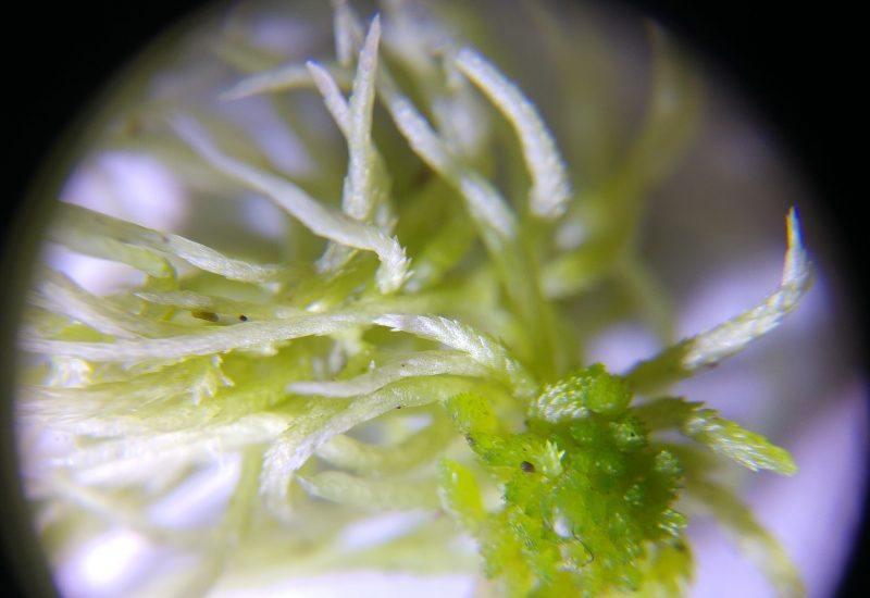 close up photo of Sphagnum moss