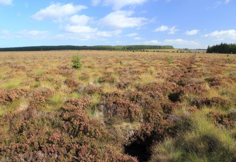 before work began on steng moss peat bog in 2013
