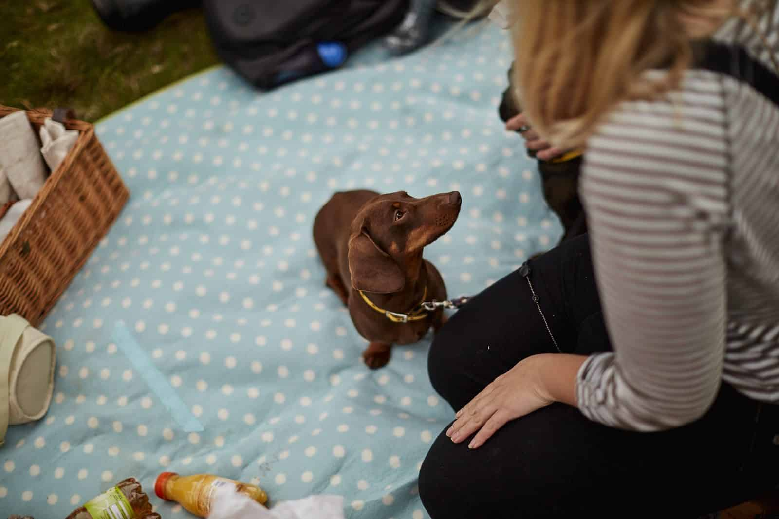 A dog on a picnic blanket