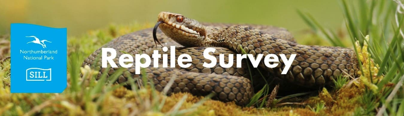 An image of coiled Adder with the National Park logo and text reading Reptile Survey