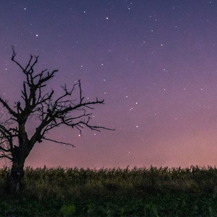 A shooting star over a lone tree