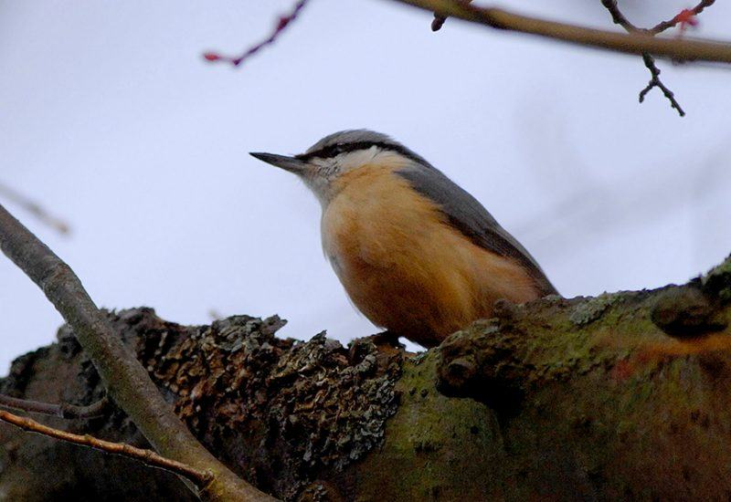 A small bird sitting in a tree at Harehsaw Linn