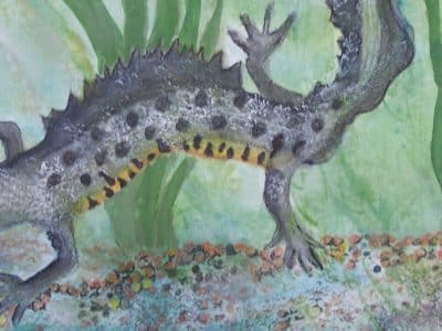 A painting of a newt underwater