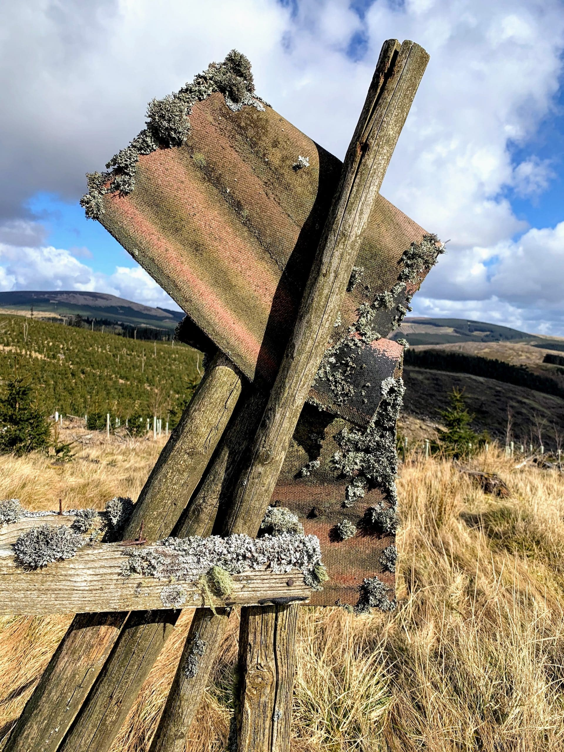 Lichens growing on a wooden frame