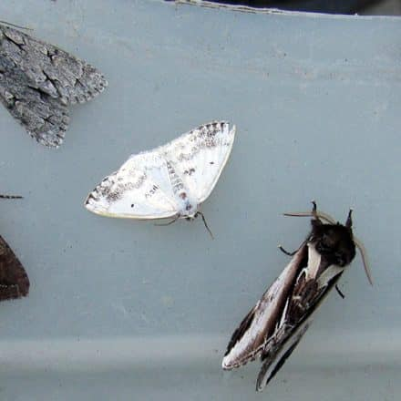 A collection of six colourful moths on a table.