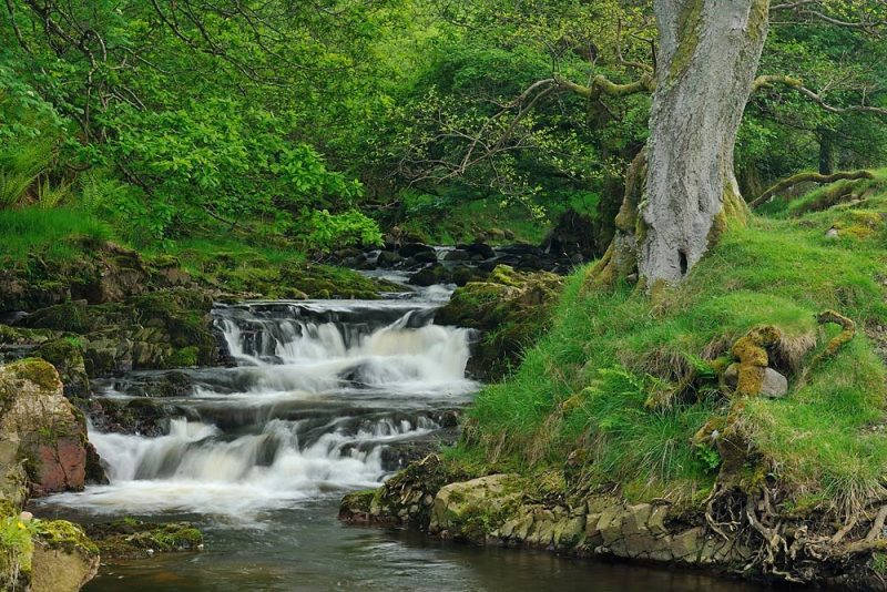 A river runs through the Harthope Valley which is lush and green with foliage.